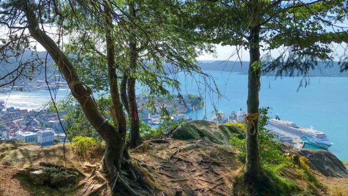 Norge Bergen - 5 fine steder for hengekøye på Fløyen